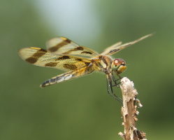 A dragon fly