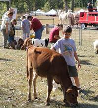 Boy with a calf at the petting zoo